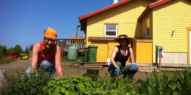 Summer Staff and Volunteer Opportunities